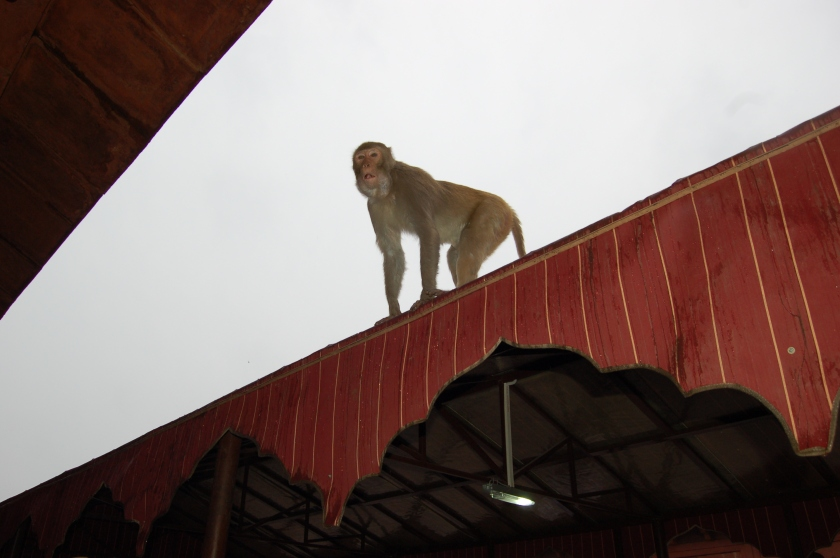 Monkey looking for food as we purchased our ticket (for a whopping 750 rupee compared to Indian citizens' fee of 25 rupees)